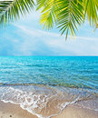 Tropical foreshore Royalty Free Stock Photo