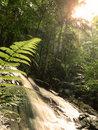 Tropical forest Royalty Free Stock Photo