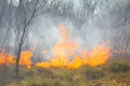 Tropical forest fire Royalty Free Stock Photo