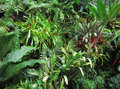 Tropical Forest Flora Background