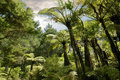 Tropical forest near Hahei Royalty Free Stock Photos