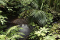 Tropical forest new zealand jungle Stock Images