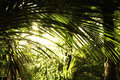Tropical forest new zealand jungle Royalty Free Stock Photos