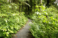 Tropical forest path Stock Images