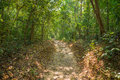 Tropical forest path Royalty Free Stock Photo