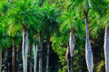 Tropical forest on a sunny day Royalty Free Stock Photo
