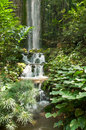 Tropical Forest Waterfall Royalty Free Stock Photography