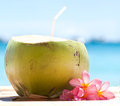 Tropical fresh cocktail on white beach coconut decorated plumeria Royalty Free Stock Photography