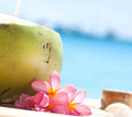 Tropical fresh cocktail on white beach coconut decorated plumeria Royalty Free Stock Images
