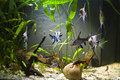 Tropical Freshwater Aquarium Royalty Free Stock Photos