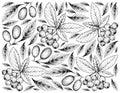 Hand Drawn Background Of Cornelian Cherries And Aronia Cherries
