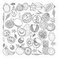 Tropical fruits. Vector illustration, doodle set