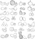 Tropical fruits vector illustration of a in line art Stock Images