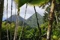 The tropical garden of Balata, Martinique