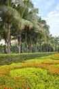 Tropical garden the landscape of Royalty Free Stock Photography