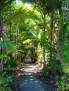 Tropical Garden Path Royalty Free Stock Photography