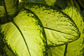 Tropical green leaf - abstract background Stock Photos