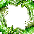 Tropical Hawaii leaves palm tree frame in a watercolor style. Royalty Free Stock Photo