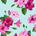 Tropical Hibiscus Flower Seamless Pattern Royalty Free Stock Photo