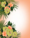 Tropical Hibiscus Flowers border Royalty Free Stock Photo