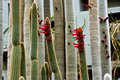 Tropical house hamburg planten un bloomen cacti in the Royalty Free Stock Photo
