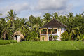 Tropical house with a tiled roof among rice fields. Island Bali, Indonesia