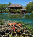 Tropical hut over water and starfish underwater scene in the caribbean sea with a thatched a coral reef with Royalty Free Stock Photos