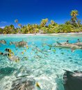 Tropical island above and underwater Stock Photos