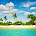 Tropical island beach with perfect blue sky paradise palm trees Stock Photography