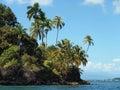 Tropical island with beautiful palm trees isla solarte bocas del toro panama Stock Image