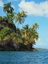 Tropical island with coconut trees beautiful palm isla solarte bocas del toro panama Royalty Free Stock Images