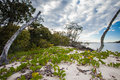 Tropical island near Gold Coast Stock Image