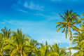 Tropical island palm trees on sky background beautiful Stock Photo