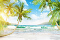 Tropical island with palm trees Royalty Free Stock Photo