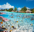 Tropical island under and above water Royalty Free Stock Photo