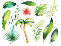 Tropical isolated illustration set. Watercolor boho tropic papm tree, leaves, green leaf, drawing, gungle exotic aloha Royalty Free Stock Photo