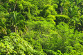 Tropical jungle background Stock Photos
