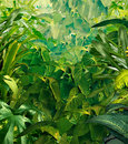 Tropical jungle background with rich green plants as rich fauna as ferns and palm tree leaves found in rain forest warm Stock Image