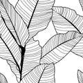 Tropical jungle banana leaf pattern, black and white