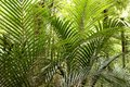 Tropical jungle forest Stock Photo