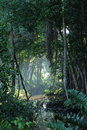 Tropical jungle forest clearing Stock Photography