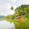 Tropical jungle on the lake Stock Photo