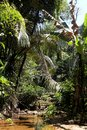 Tropical jungle in Phuket, Thailand. Exotic trees in National Park. Royalty Free Stock Photo