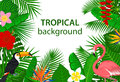 Tropical jungle rainforest plants flowers birds, flamingo, toucan background. Royalty Free Stock Photo
