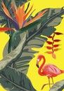 Tropical jungle rainforest plants flowers, flamingo, toucan border background