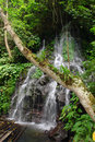 Tropical jungle with tree, raft and waterfall Stock Images