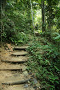 Tropical Jungle Trek Path Royalty Free Stock Photos