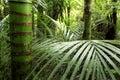 Tropical jungle vegetation Royalty Free Stock Photo