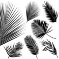 Tropical leaf  Royalty Free Stock Photography