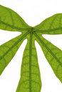 Tropical leaf close up nature flowers and gardens Royalty Free Stock Photography
